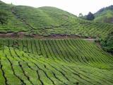 Malaysia 2005