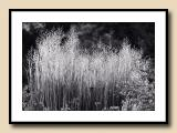 Grasses in Late Day Light