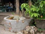 Vientiane 2004