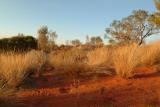 Red soil and grass