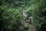Trail through the Basse-Terre Rainforest
