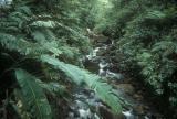 Basse-Terre Rainforest