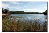 NJ Botanical Gardens,  Ringwood State Park & Shepherd Lake
