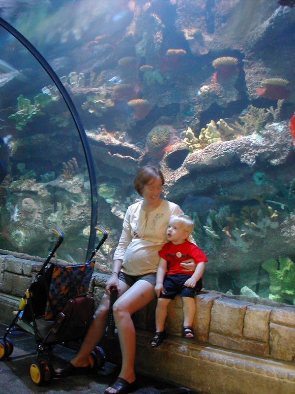 Aquarium - Mandalay Bay