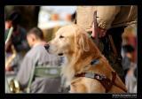 First meet  the guide dog /  ªì¹J¾Éª¼¤ü