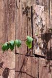 Door and leaf