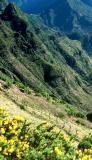 Ile de Madère - Paysage de la montagne avec des ajoncs