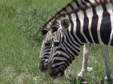 Etosha Park - Namibia