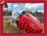 Stawberry Farm