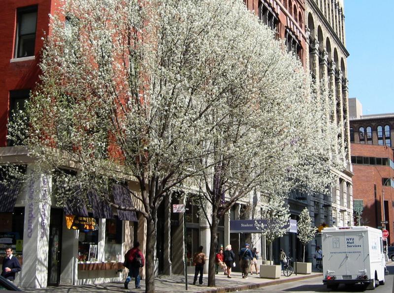 NYU Facilities - Green to Mercer Street