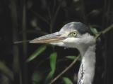 Birds of Oxfordshire
