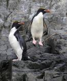 Antarctic Spring   2004