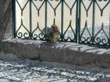 A Santorini kitten outside the gates of a cat santuary