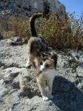 A friendly Santorini cat - Cyclades Greece
