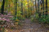 Hiking Trail in Jones Gap State Park