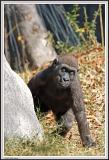 Baby Gorilla - IMG_1003.jpg