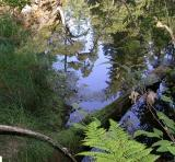 Relections on the S. Fork of the Eel River