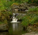 On Elder Creek