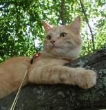 Linda tähystämässä puusta!