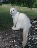 Putte posing on the birch tree.