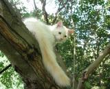 Presenting my tail!!    Hännän esittelyä!