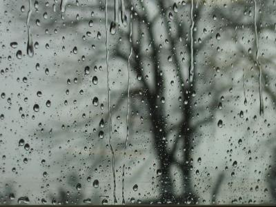 A tree with raindrops<br>9443a