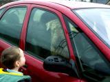 19th January, Le chien qui conduit