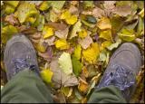 Feety photos