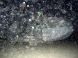 Ping Underwater 2.jpg