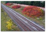 Autumn colour by the tracks