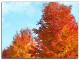 Autumn colourburst
