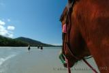 Beach riding at the Daintree Forest  North Queensland