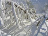 givre sur branches