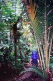 kouri forest