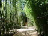 Bamboo Trails