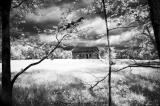 Rowe Wood Digital IR