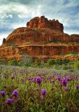 Bell Rock Blossoms