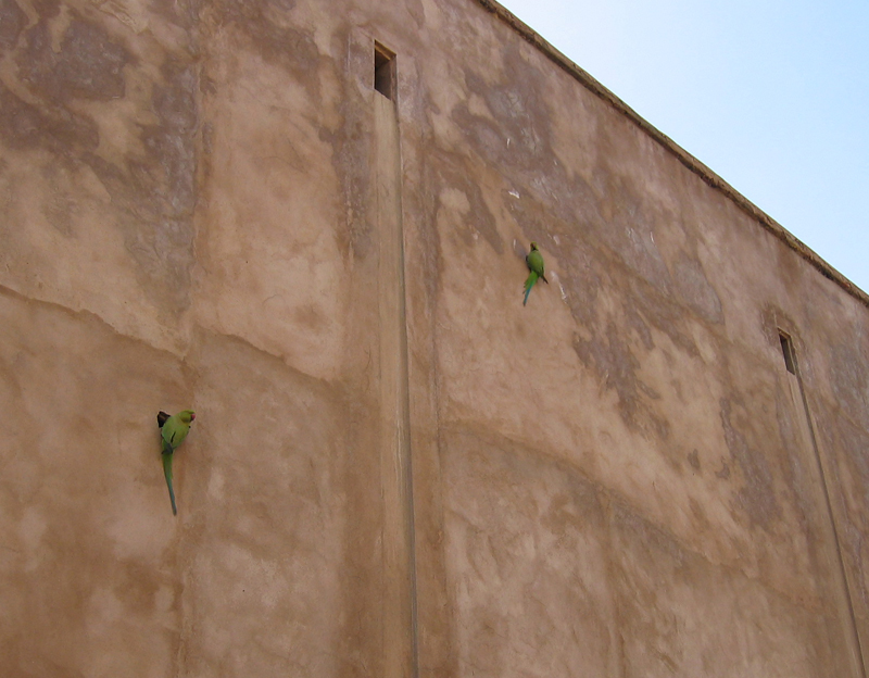 Parrots on the Wall