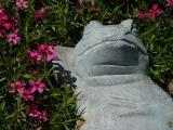 Frog and Phlox