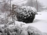 Snow (2005)!