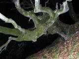 Dans la noire forêt du Soum d'Ire