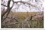 Everglades, Anhinga Trail, Jan, 2005
