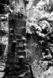 Fungi on Palm Tree