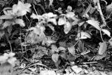 Kitten in the Bush