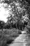 Path to Kampong Melayu Beach