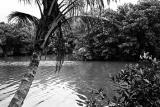 River of Kampong Mamam