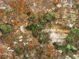 Lichen on sandstone