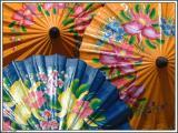 Umbrella / Chiang Mai