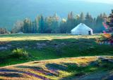 Meadow in Kalasi 4