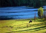 Grassland in Kalasi 7